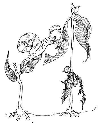 Plants & Gdns pic